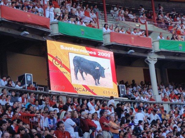 Statistics of the bulls onscreen
