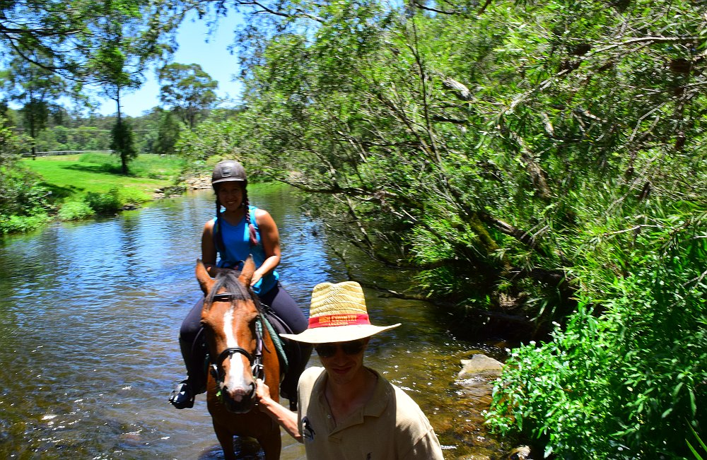 A scenic ride is a great way to see the natural beauty of the Gold Coast Hinterland