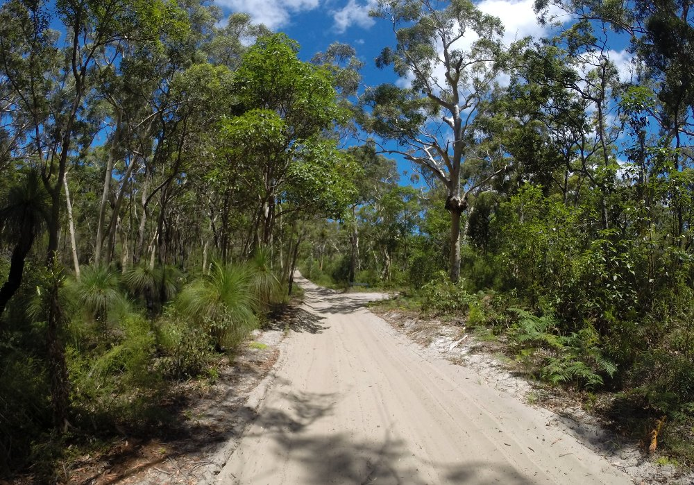 The vegetation on Moreton Island is beautiful and fascinating