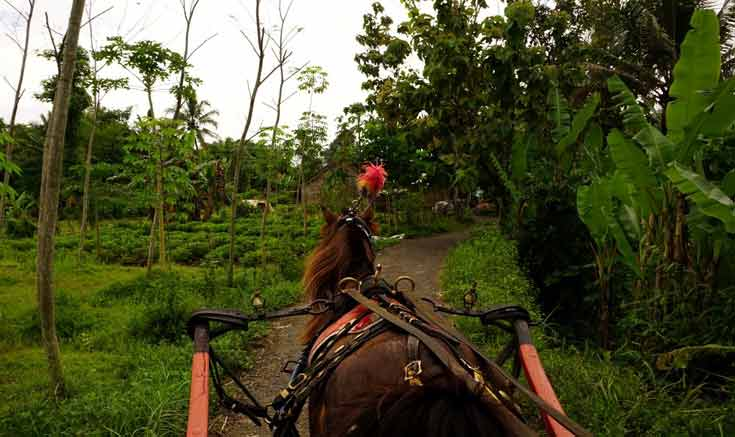 Things to do in Yogyakarta - Take a leisurely andong ride through the villages