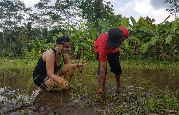 Planting rice in Pentingsari, Yogyakarta, Indonesia