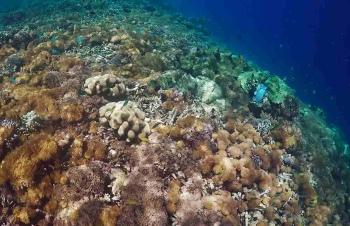 Snorkelling in Raja Ampat