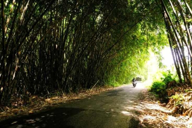 Bamboo Archway of Penglipuran Village