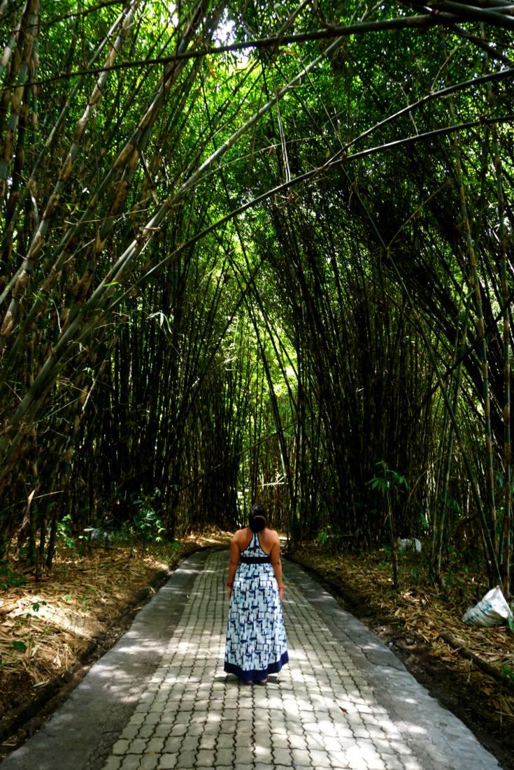 Bamboo in Penglipuran