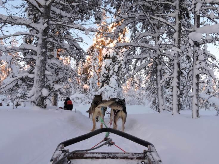 Husky Safaris Finland