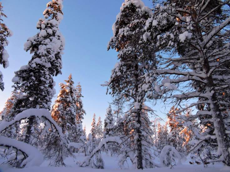 Winter wonderland in Finnish Lapland