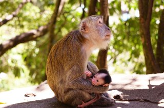 Plenty of monkey sightings in Malaysia